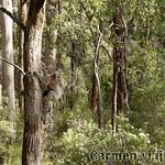 Viajefilos en Australia. GOR  090
