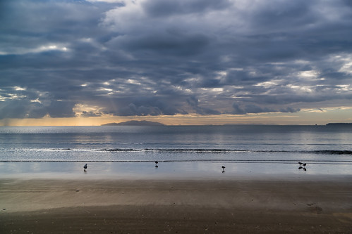 sea beach water rain seagull auckland oystercatchers orewa haurakigulf morningshowers wenderholmreserve