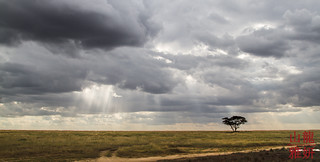 Rainy plains | by DragonSpeed
