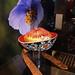 Bhútán – země blízko nebe, foto: Petr Nejedlý