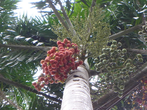 dennishundscheidt tropicalstylegarden balinesestylegarden tropicalesque tropicalplants opengarden sunnybank brisbane queensland australia tanetahi