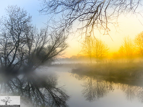 trees sun mist reflection tree fog sunrise river bedford bedfordshire flare felton countrypark greatouse priorycountrypark robertfelton
