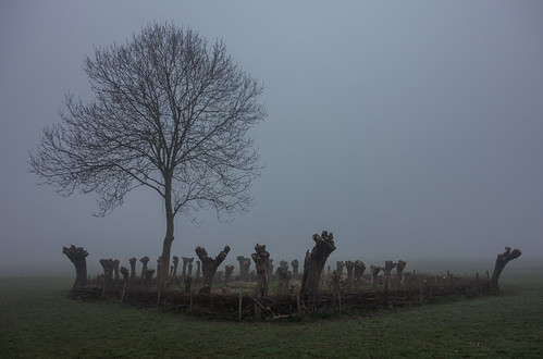 mist fog fence woods grove fenced polder coppice hff middendelfland nederlandvandaag geriefbos