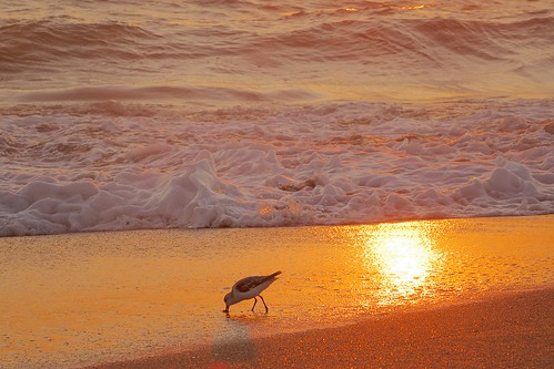 ocean beach sunrise dawn sand solitude surf alone florida foam sandpiper solitary indialantic
