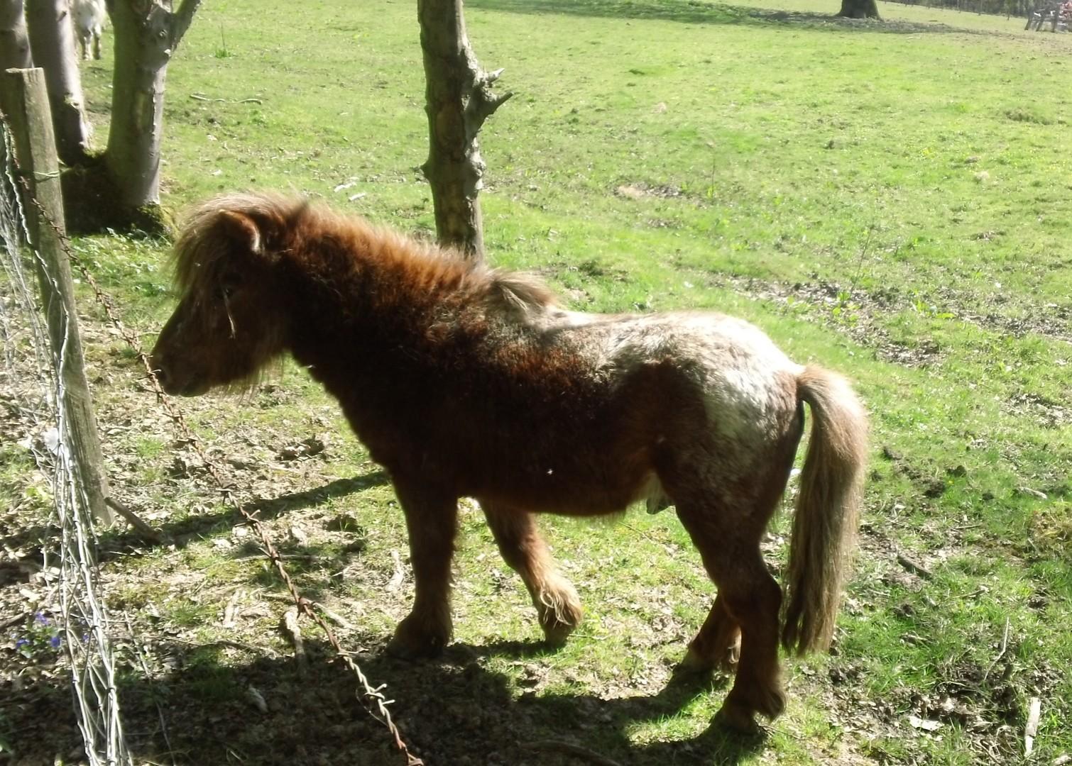 Friendly pony... before reinforcements arrive...