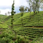 13 Viajefilos en Sri Lanka. Tren a Ella 31