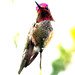 February 4, 2015 - 9:52am - anna hummingbird