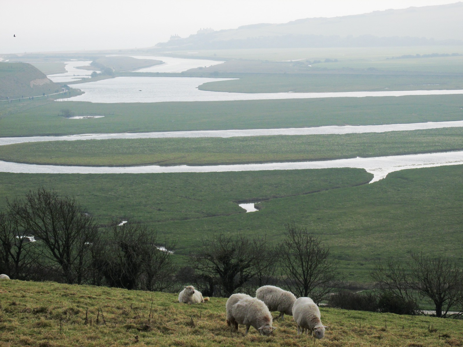 April 6, 2015: Glynde to Seaford Sheep & Cuckmere Haven