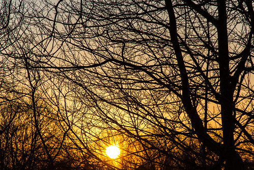 trees sunset spring nj og tintonfalls day91 2015 eplore explored day91365 365the2015edition 3652015 1apr15