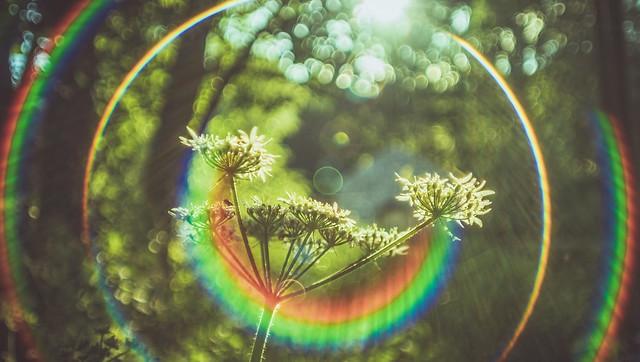 Nature's Smile