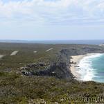 Viajefilos en Australia. Kangaroo 58