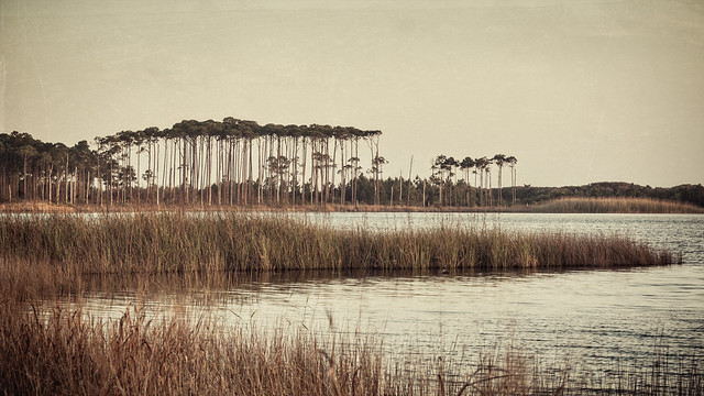 trees on western lake