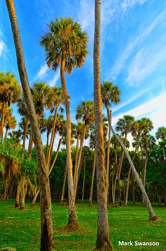 park trees sky sun grass sunrise orlando nikon florida scenic palm 1855mm polarizer topaz adjust d5100