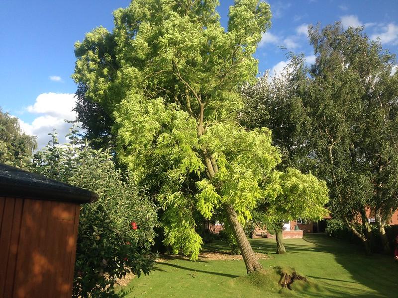 Tree Care Gallery
