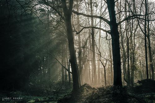 wood trees light england sunlight woodland dark unitedkingdom sony silhouettes rays shining dorchester a99 sonyalpha andyhough slta99v littlewittenhamwood andyhoughphotography tamronsp70200di