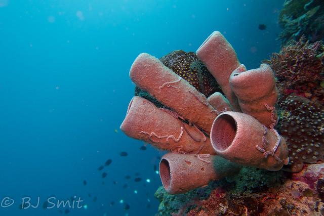 Explored :) - Bunaken - Indonesia - Wall dive