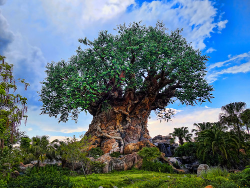 Disney Animal Kingdom | by magicalfanaticism