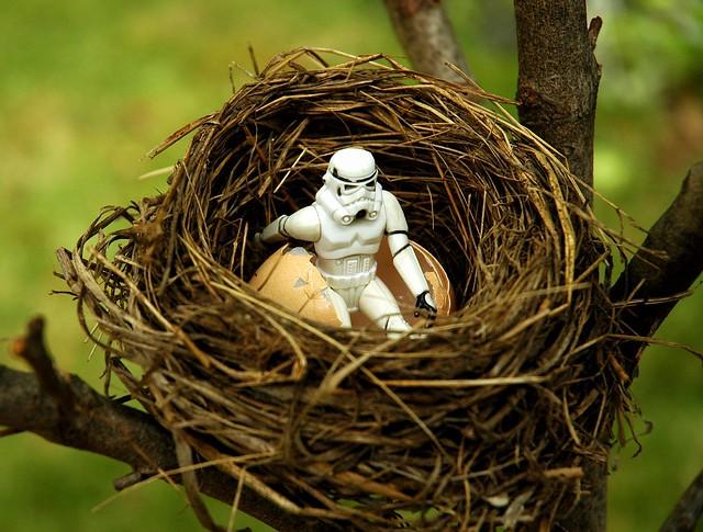Storm Trooper Nest