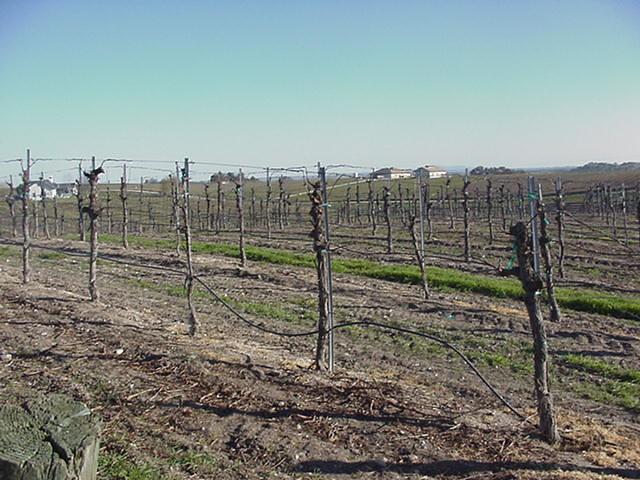 WineTour2003_078