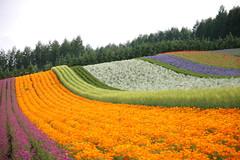 rainbow farm #2   by nakae