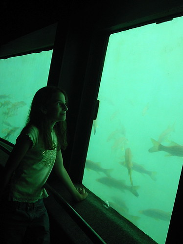 fish ford anne florida wildlife mustang joyride homosassaspringswildlifepark