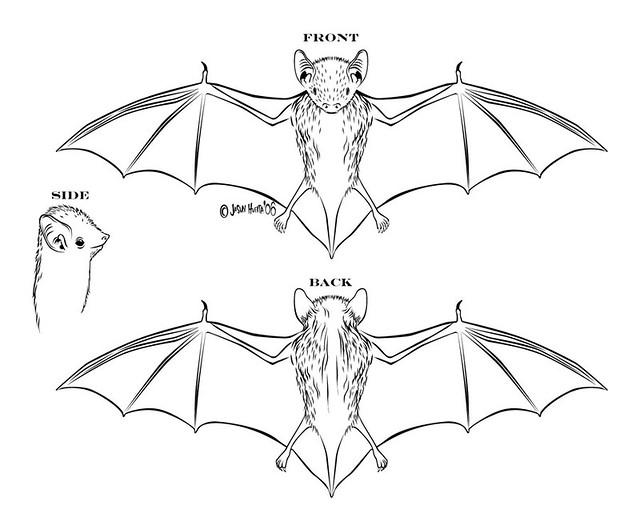 diagram of a bat diagram of a bat i drew today 8 24 06 c\u2026 flickr Colorful Bat Diagrams diagram of a bat by batman63
