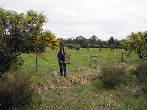 Sue with Seedlings for Roadside Revegetation - Red Moon Sanctuary, Redmond Western Australia