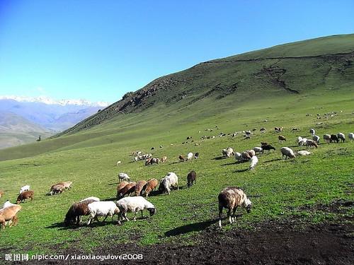 圖03.放牧嚴種破壞山區植被