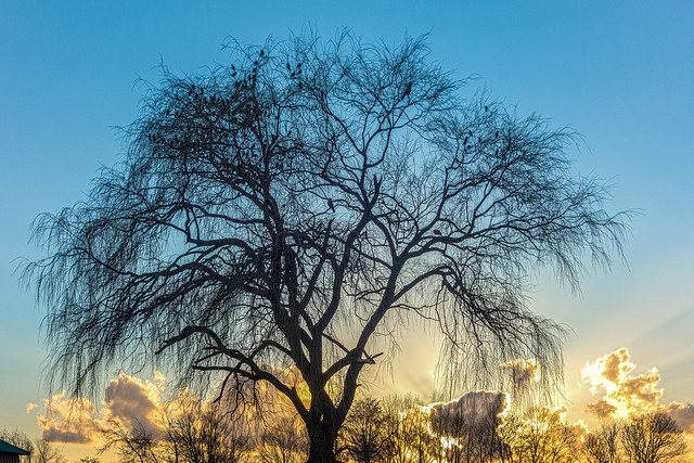 Filigree tree