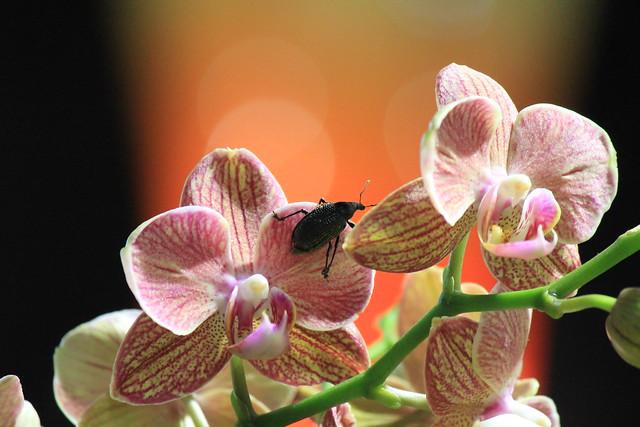 orchidée et insecte