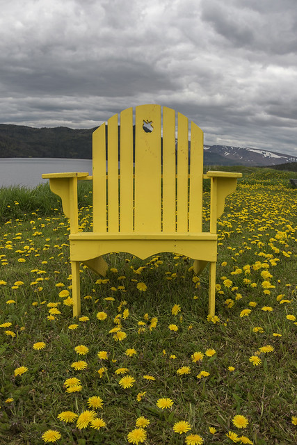 Dandelions with yellow chair
