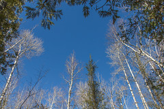 Warm Blue Sky