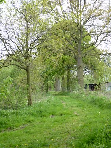 Trage Weg naast Bos van Marpingen