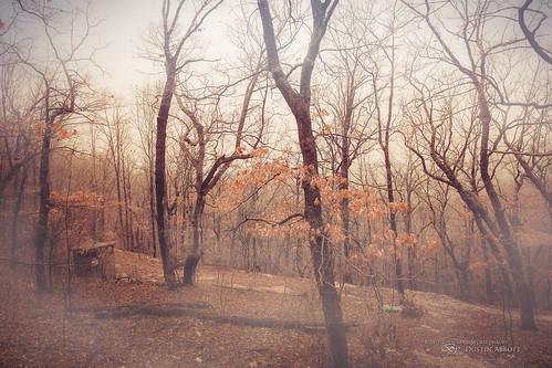 travel usa mist canada tree texture fog spring oak unitedstates bare atmosphere missouri fullframe ozarks branson familytime 2015 canoneos6d thousandwordimages dustinabbott dustinabbottnet tamronsp2470mmf28vcusd adobelightroom5 adobephotoshopcc alienskinexposure7