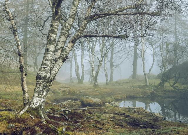 Tarn Tales II - Holme Fell Tarn