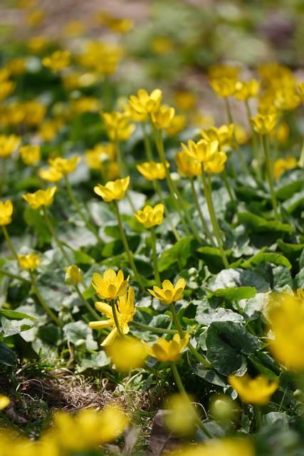 木, 2015-04-16 14:23 - Brooklyn Botanic Garden
