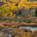 Kebler Autumn Rain