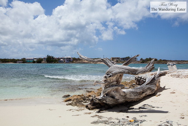 Driftwood on Scilly Cay Island