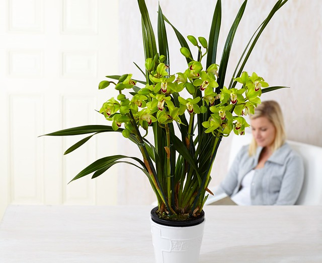 potted orchid with a blonde woman wearing a light blue blouse in the background seated on a chair reading