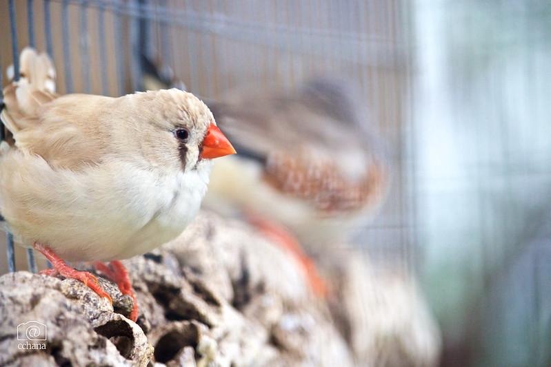 Orange beak