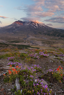 Volcanic Bloom   by TeeJay_S