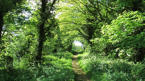 trees summer green countryside woods path walk yorkshire sunny doncaster southyorks barnburgh