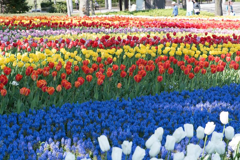 4月11日のお花