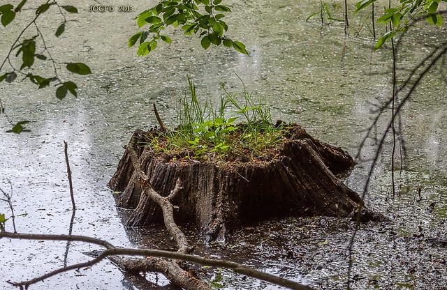 Leipzig, Lindenthal, Sumpf im Wald