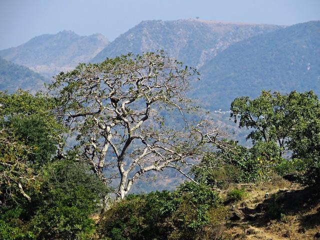 kumbalgarh landscape