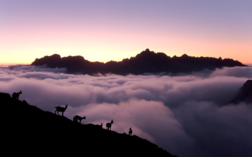 Chamois over the clouds / Rebecos sobre las nubes