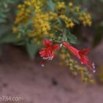 Flower in Bear Trap Canyon