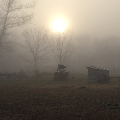 sunrise farm foggy spooky uploaded:by=flickstagram instagram:venuename=whirlawayfarm instagram:venue=42607276 instagram:photo=902158156513303448144513221