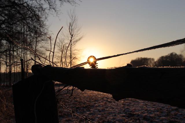 Sonne im Weidezaun (2/2)