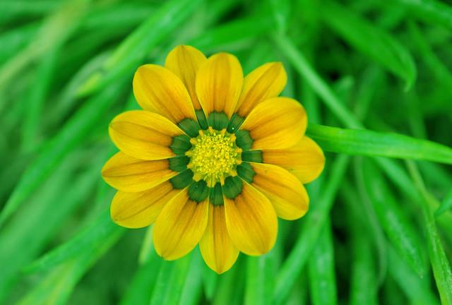 Do you like me? As a flower...